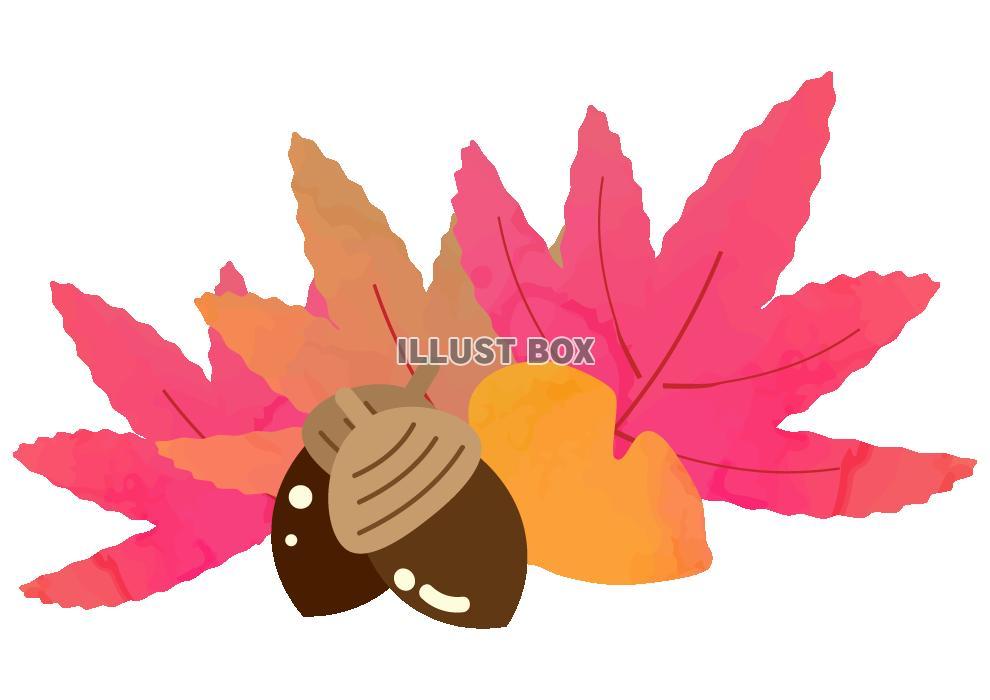 無料イラスト 落ち葉とドングリのイラスト