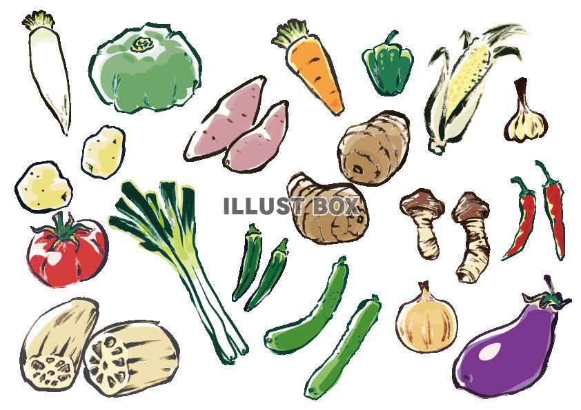 無料イラスト 手描き野菜セット