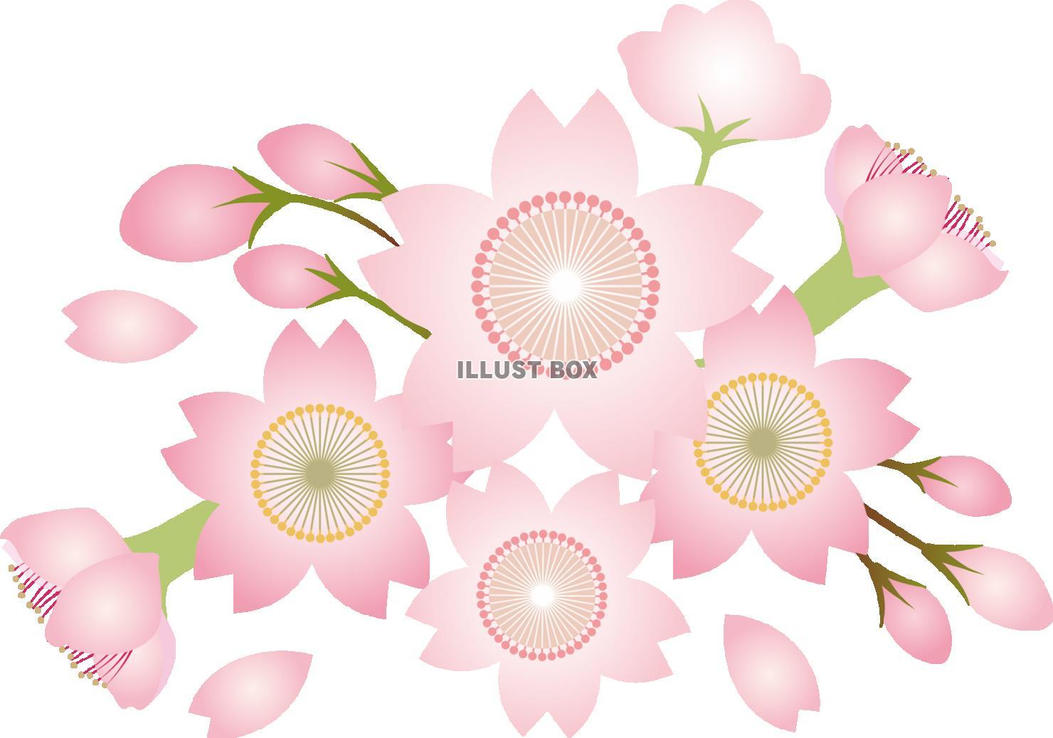 可爱い ひな祭り 春の花 和風 イラスト 背景 Wwwthetupiancom