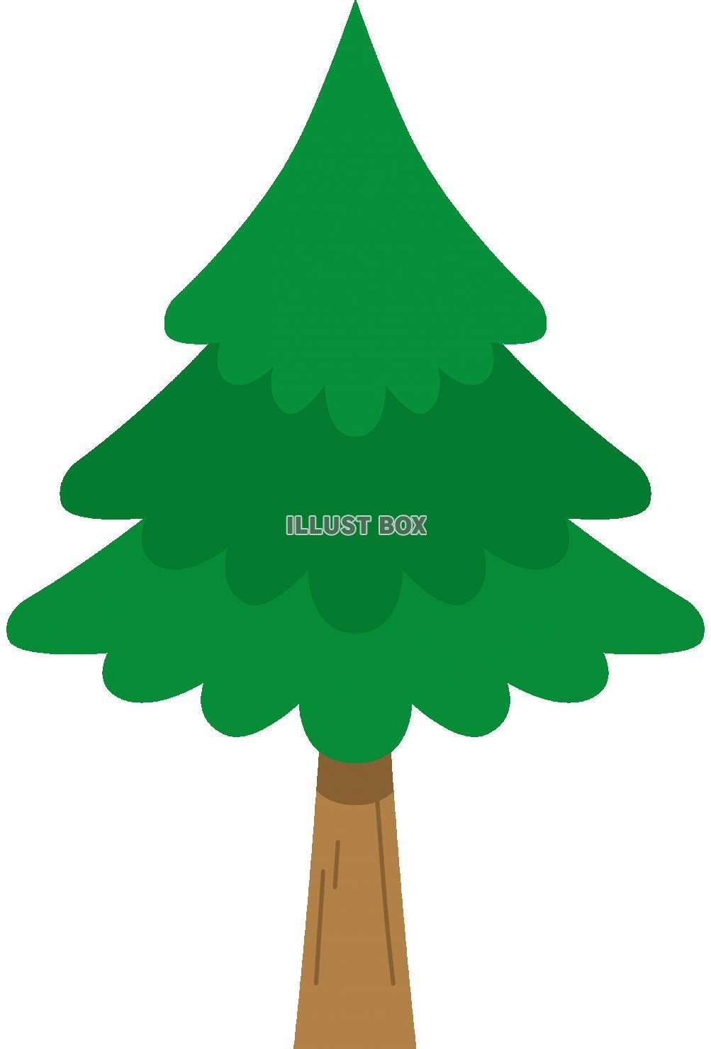 無料イラスト 杉の木