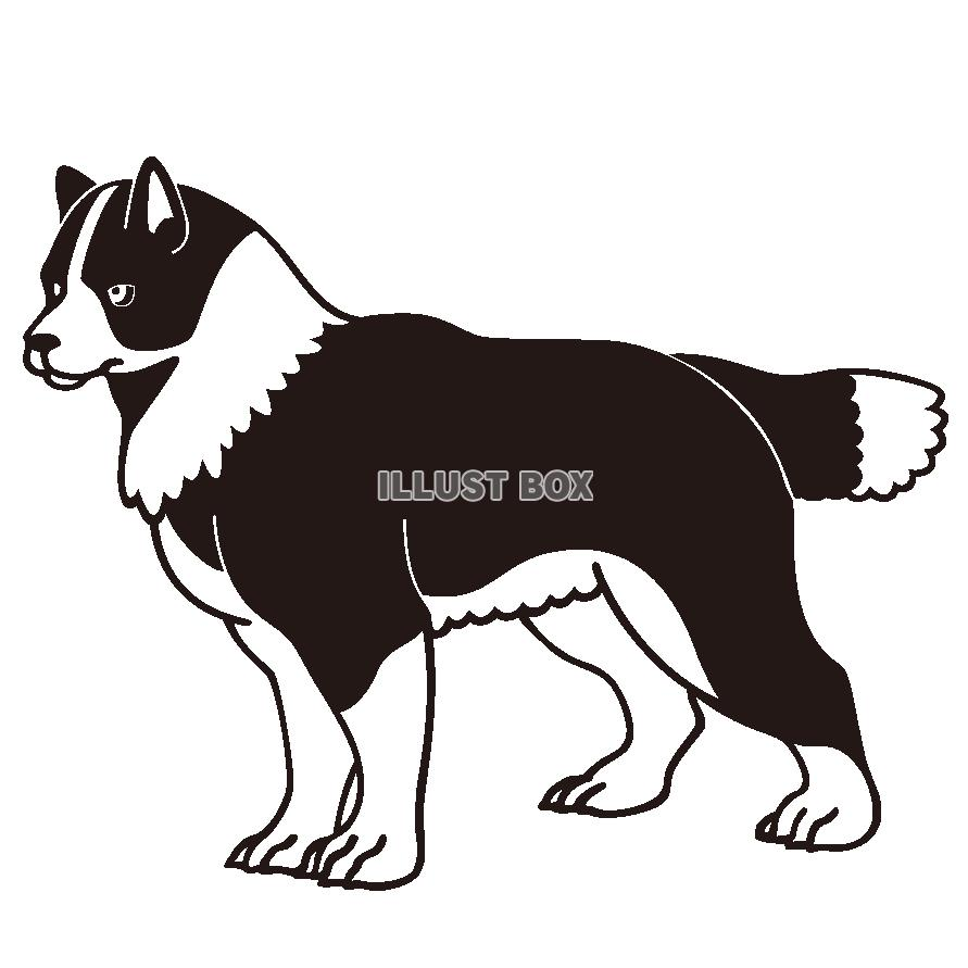 無料イラスト 犬のイラストハスキー