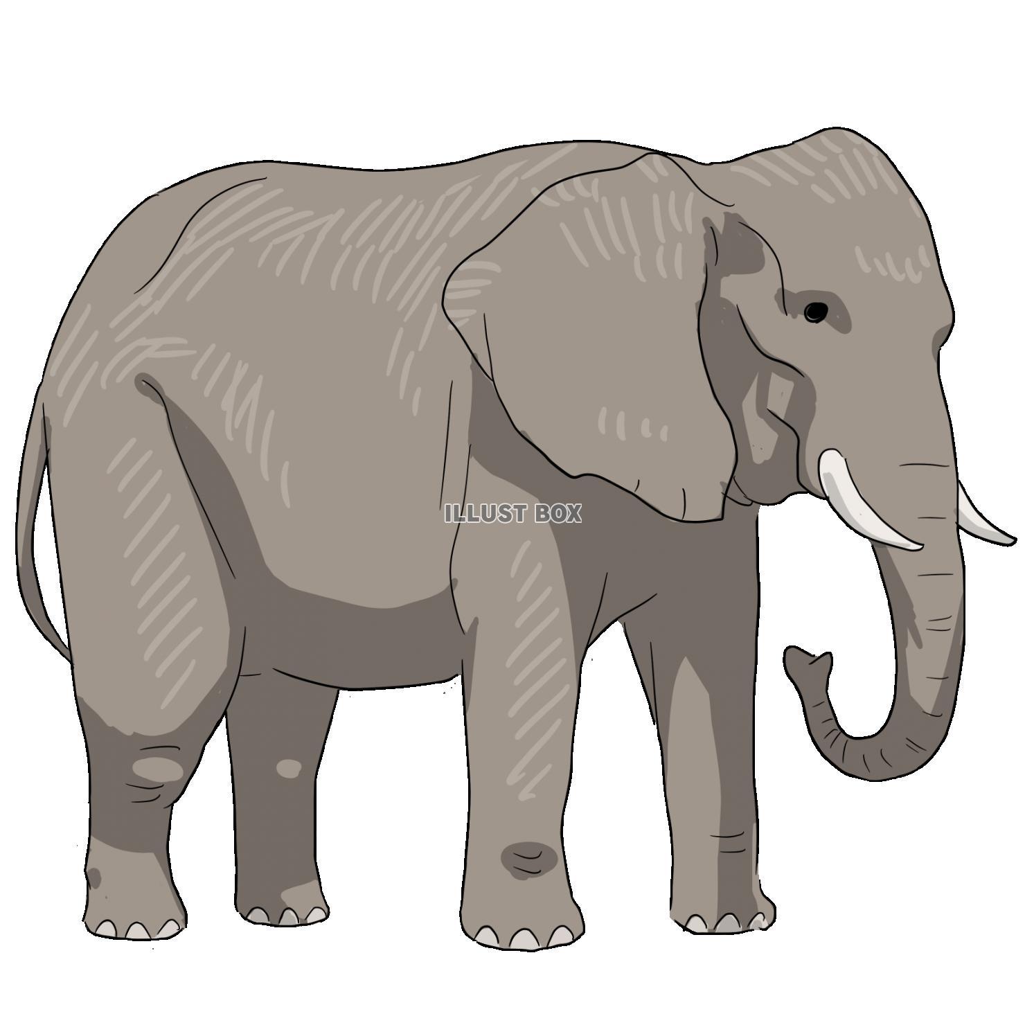 無料イラスト 象