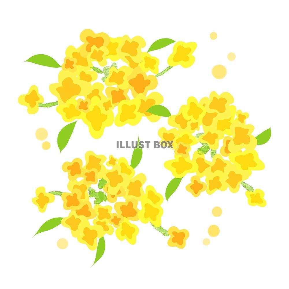 無料イラスト 菜の花