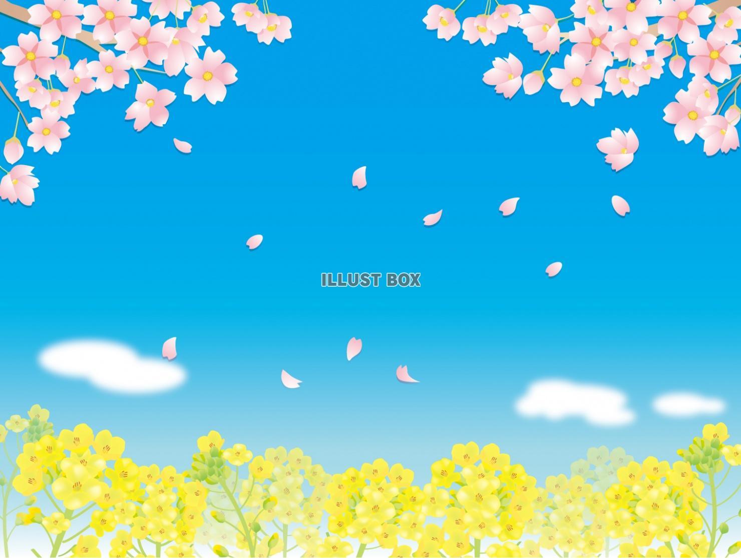 無料イラスト 桜と菜の花畑1