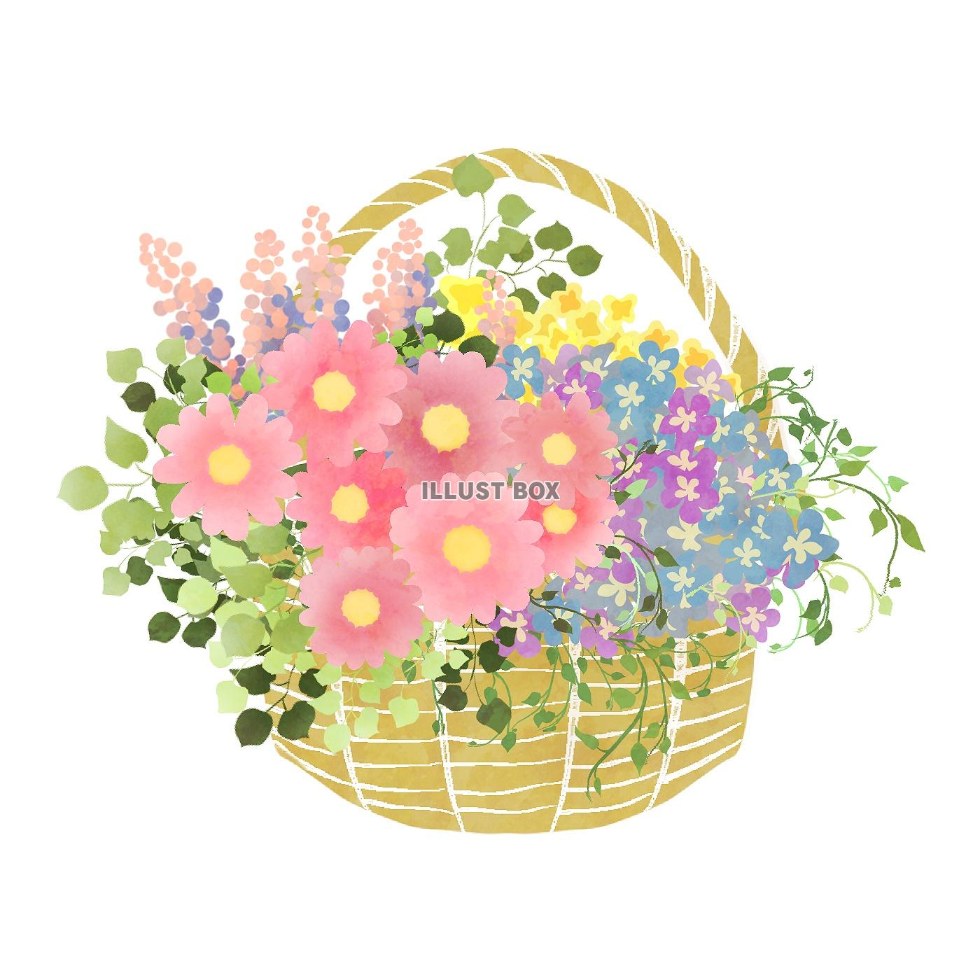 無料イラスト 花かご