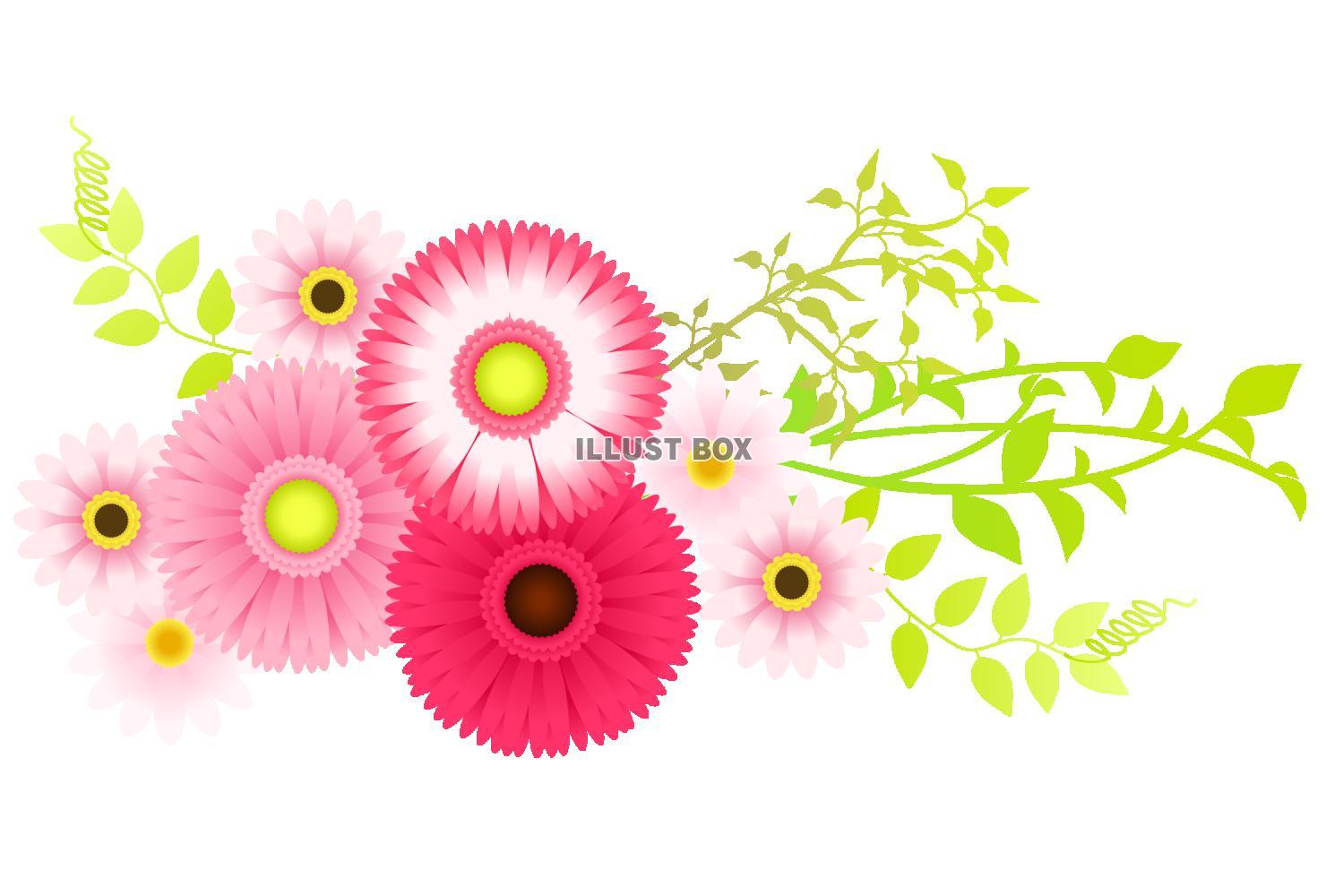 無料イラスト ピンクのガーベラのイラスト