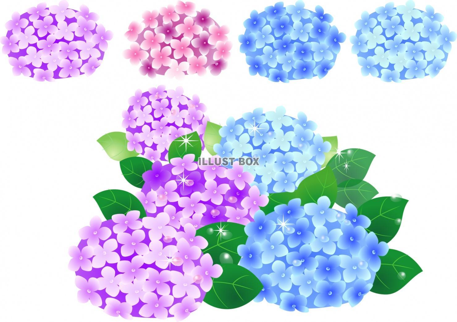 無料イラスト あざやかな紫陽花