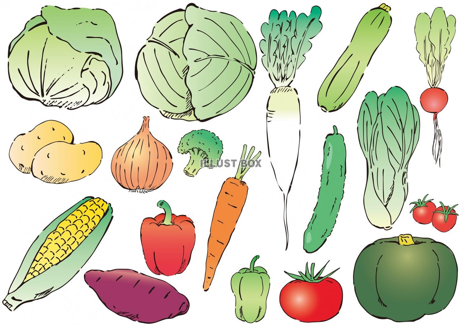 無料イラスト 手描き野菜イラスト