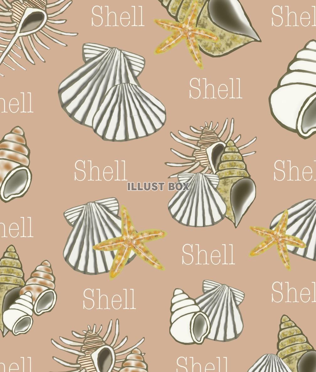 無料イラスト 貝殻の壁紙 Jpg
