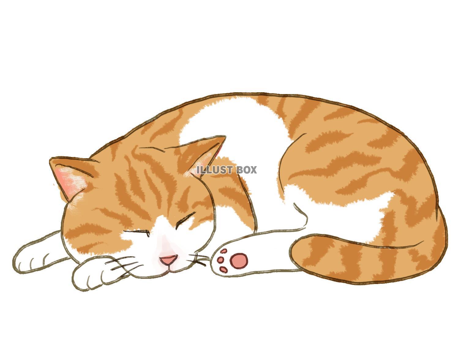 無料イラスト 眠り猫