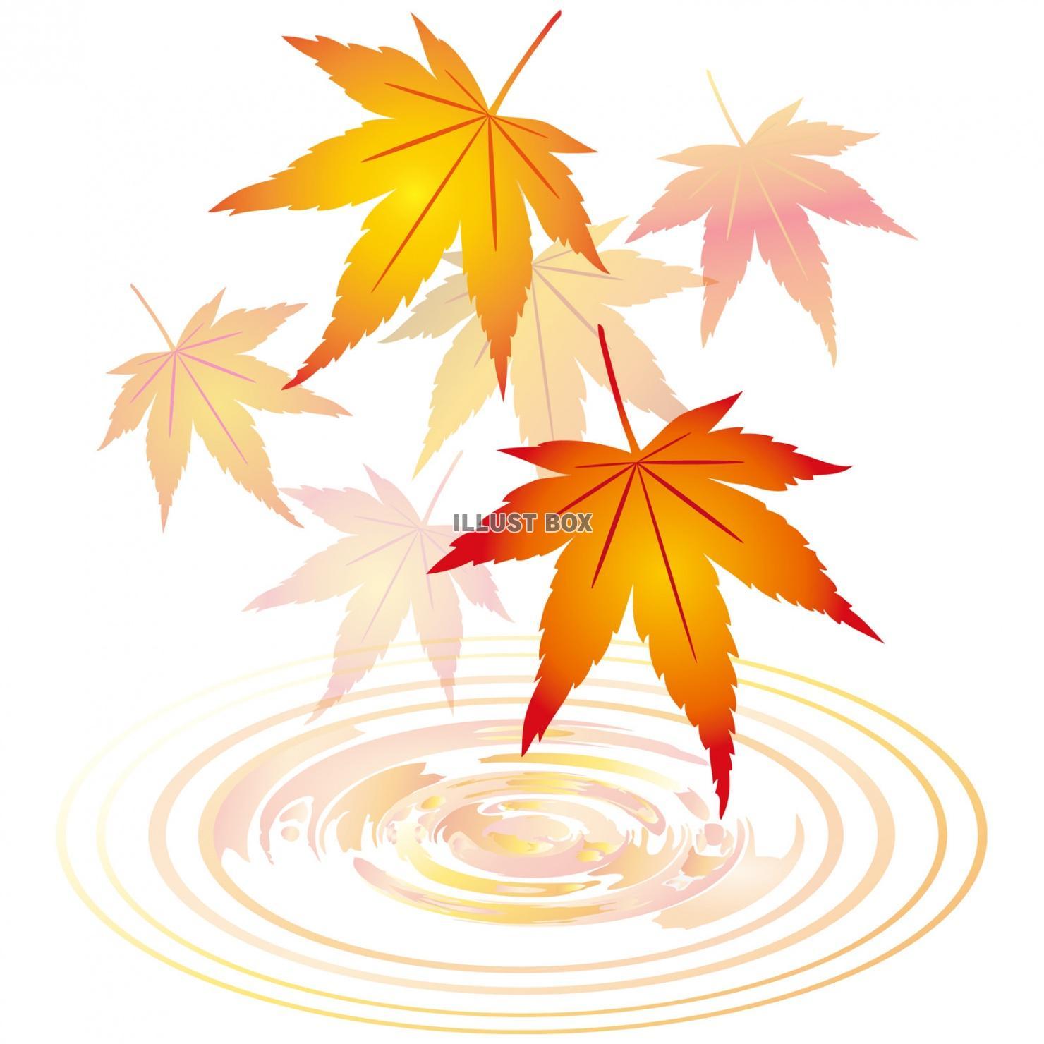 無料イラスト 紅葉もみじ飾り装飾水面10月11月モミジ葉っぱ植物楓カエデ波