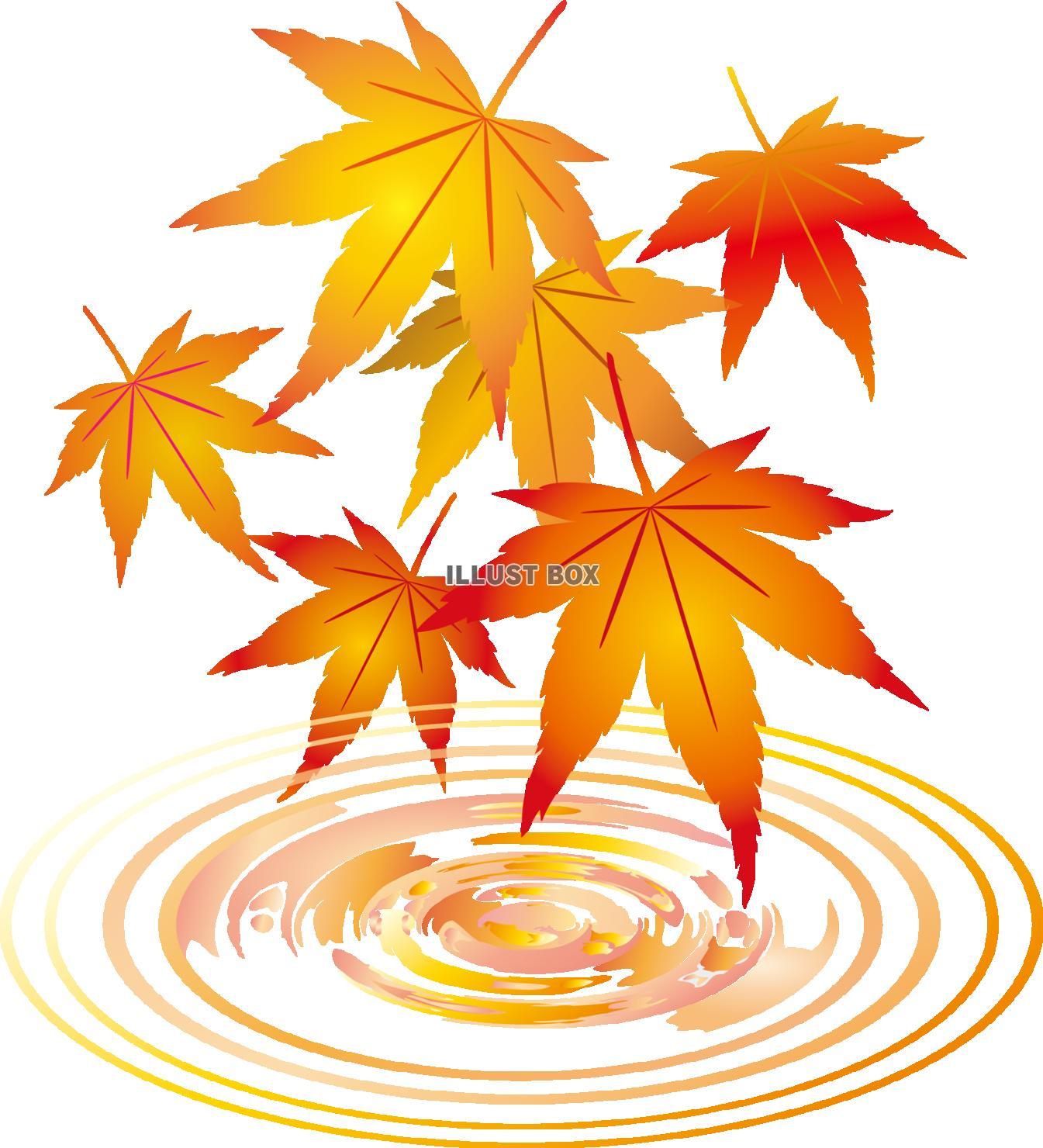 無料イラスト 紅葉もみじ飾り装飾冬水面10月11月モミジ葉っぱ植物楓カエデ