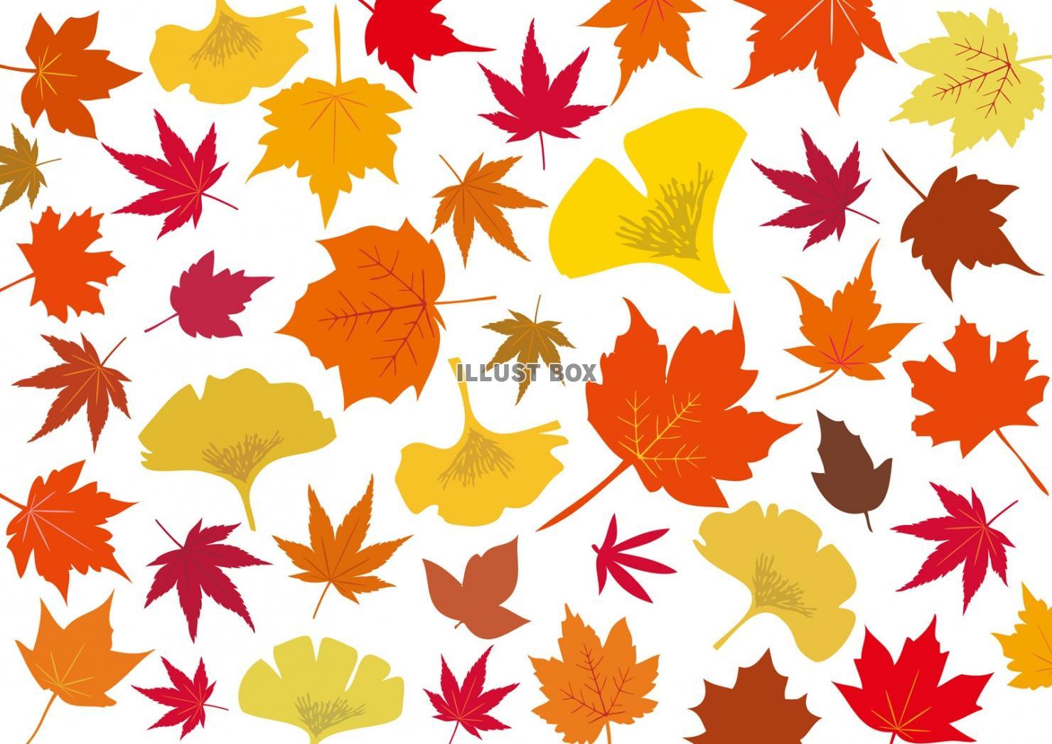 無料イラスト 秋冬紅葉もみじ銀杏10月モミジ11月イチョウ壁紙いちょう