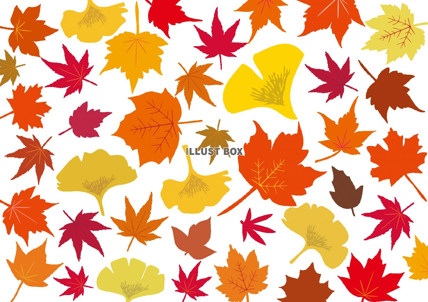 無料イラスト 秋冬紅葉もみじ銀杏10月モミジ11月イチョウ壁紙いちょう楓赤