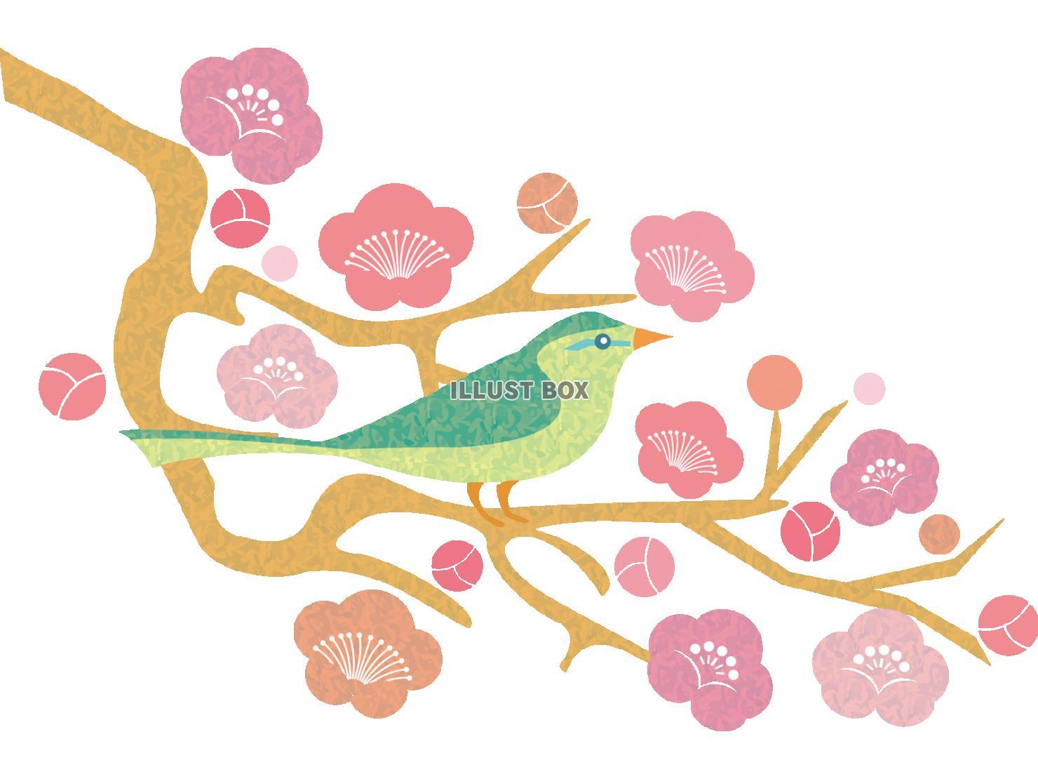 無料イラスト 和風梅花と鳥鶯の動物イラスト 1月2月3月頃の植物 透過pn