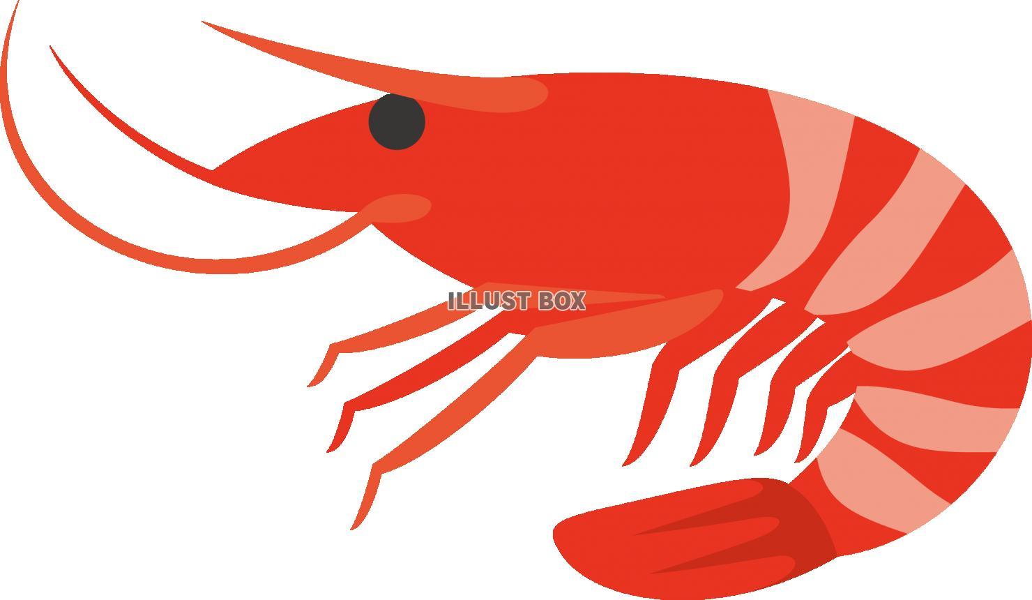 無料イラスト エビ 魚介類 海産物