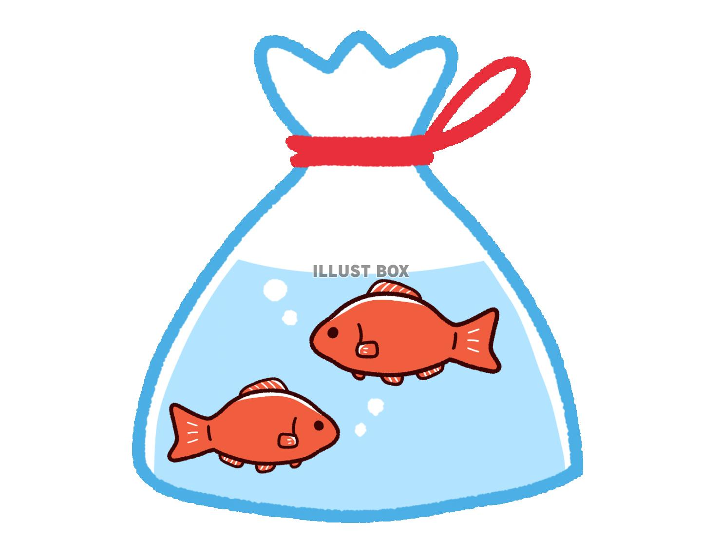 two goldfish with water inside a plastic bag tightened at the top