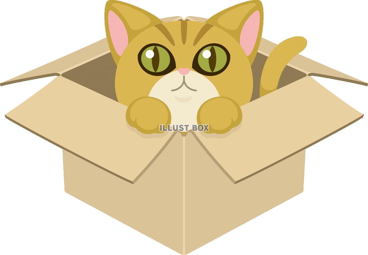 捨て猫 ペット ネコ 動物愛護