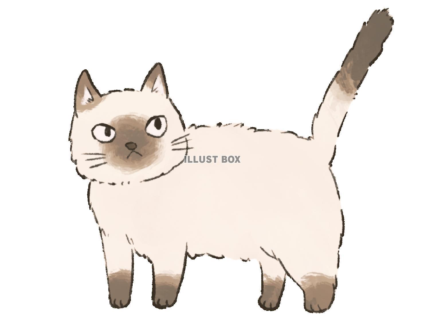 猫 シャム